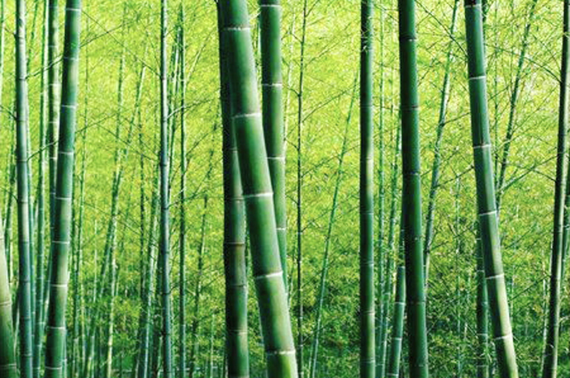 bamboo second image